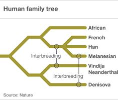 "ancient humans, dubbed ""Denisovans"", interbred with us"