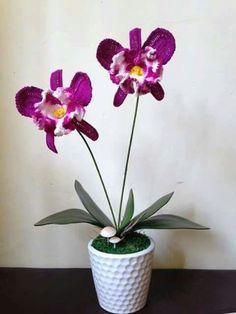 Orchidea fb