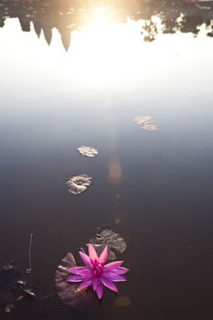 Angkor Wat reflected in the water by Dori Moreno Angkor Wat, Dory, Cambodia, Airplane View, Fine Art Prints, In This Moment, Canvas, Amazing, Flowers