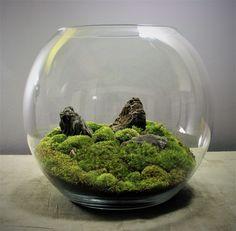 Mini Terrarium, Terrarium Scene, Cactus Terrarium, Hanging Terrarium, Garden Terrarium, Glass Terrarium, Plants In Bottles, Moss Plant, Moss Garden