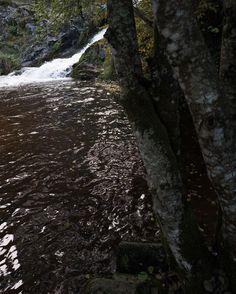 Water & Wood #vertical #lfi #composition #nature #water #forest #calm #elements #explore #wander #bourgogne #france #bois #reflection #leicaq #leica #cascade