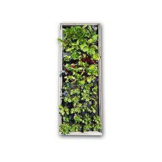 "Seedsheet Salad Kit - 12"" x 36"", Mixed salad greens >>> See this great image  : Gardening Tools"