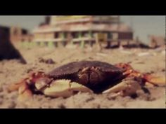 Crab Stars In Clever Marketing Campaign For Eco-Friendly Tampons (Video)