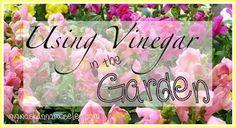 Great tips for using #vinegar in the garden!