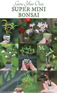 bonsai trees Grow your own super-mini bonsai from Miniature Bonsai: The Complete Guide to Sup. Grow your own super-mini bonsai from Miniature Bonsai: The Complete Guide to Super-Mini Bonsai Growing Plants, Miniature Garden, Fairy Garden Diy, Flowers, Mini Bonsai, Mini Garden, Plants, Fairy Garden, Tree Care