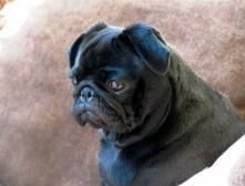 such a sweet facehttp://pinterest.com/source/ownedbypugs.com/#!