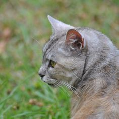 Luna, contemplating    #luna #cat #cats #pet #petstagram #nature #kitten #kittens #catstagram #cutie #pets #kitty #catlovers #catsofinstagram #animal #sweet #funpetlove #catlover #ilovemycat #ilovemypet #instapets #petsagram #picpets #instacat #love #music #faces #coffee