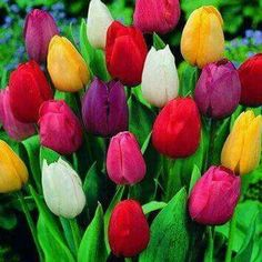 Prism of colours lyk dis!! Wil make u fall even more deeply with spring!!