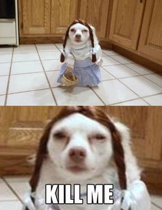 48 Best Funny #Animal Memes #funny #meme #memes #humor #comics #fun
