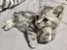 Kittens Cutest, Cute Cats, Funny Cats, Cute Little Animals, Baby Animals, Funny Animals, Cutest Animals On Earth, Cute Animal Pictures, Funny Animal Pictures