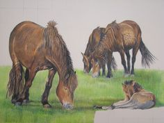 "Good morning to you all. Here is the latest update of my illustration entitled ""Exmoor ponies and foal"". This image is created using Photochromic pencils.  As you can see I have now completed the group of adult ponies and foal, and have started work on the foreground. I do hope you enjoy watching this piece grow. Please feel free to give me any feedback. To see what people have to say about my work, please visit http://www.davidtruman.co.uk/Testimonials"