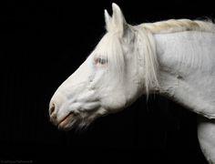 The natural blonde :) by Svetlana Petrova, via 500px
