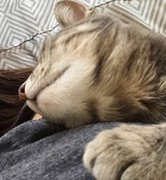 Cuddles with one of my many fur babies. #animal #cute #family #photography #lazy #cats #catstagram #catsofinstagram #pets #beautiful #bestfriend #love #like #follow http://tipsrazzi.com/ipost/1511221734027382260/?code=BT48CkJjU30