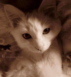 lover by gaya521.deviantart.com on @deviantART