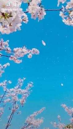 Flor de cerezo - Flor de cerezo Estás en el lugar correcto para healt Aquí presentamos healthy eating que está bus - Cherry Blossom Drawing, Cherry Blossom Wallpaper, Flower Wallpaper, Nature Wallpaper, Wallpaper Backgrounds, Arte 8 Bits, Spring Wallpaper, Flower Video, Sky Aesthetic