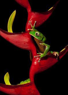 frog #beautiful
