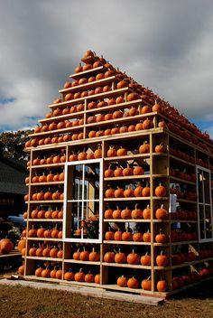 autumn...house of pumpkins