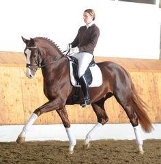 Pretty chestnut horse!