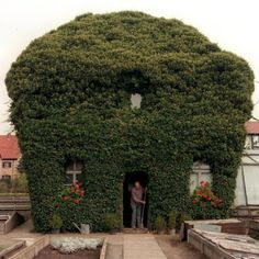 malformalady:  Ivy covered house More on my Blogspot