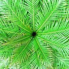 Radial Symmetry Photography - Google Search