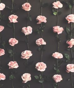 Image via We Heart It https://weheartit.com/entry/166790340/via/130536 #flowers #hipster #indie #photography #tumblr #vintage
