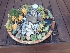 Little fairy garden for kindergarten with small rocks and succulents, the children  can have small people to play with all afternoon