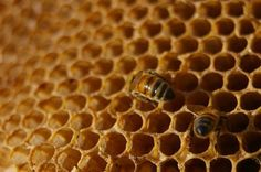 More uses for honey