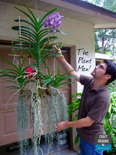 Gardens Discover Vanda Orchids love to have their roots in the open air. More about hanging Vanda Orchids: Orchids Garden Orchid Plants Succulents Garden Air Plants Garden Plants Hanging Orchid Hanging Plants Orquideas Cymbidium Growing Orchids Orchid Planters, Orchids Garden, Succulents Garden, Garden Plants, Orchid Terrarium, Hanging Orchid, Hanging Plants, Indoor Plants, Orquideas Cymbidium