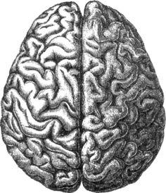 Disso Voce Sabia?: Cientistas identificam diferença entre cérebros masculino e feminino