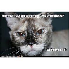 Clint cat
