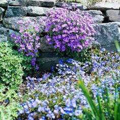 Rock Garden Color Combinations  Create a calming mood in your rock garden by choosing a variety of fast-growing groundcovers in cool, analogous hues, such as blue and violet. In this site, the delicate blooms of Aubrieta 'Royal Blue' and Veronica 'Waterperry Blue' gently flow into each other, covering the stone steps with a soothing cascade of color.