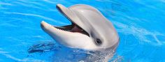 About Dolphins - Swim With Dolphins in Florida