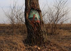 Street art on trees by Evgenia Dudnikova  Designer Daily graphic and web design blog