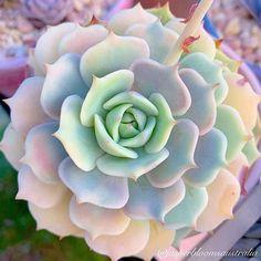 Propagating Succulents, Succulent Gardening, Succulent Terrarium, Cacti And Succulents, Planting Succulents, Garden Plants, Indoor Plants, House Plants, Planting Flowers
