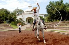 """The charreada or charrería is a competitive event similar to rodeo and was developed from animal husbandry practices used on the haciendas of old Mexico. The sport has been described as """"living history,"""" or as an art form drawn from the demands of working life.     In Jalisco, the competing charros often came from families with a tradition of Charreria, and teams today are often made up from extended families who have been performing for up to five generations."""