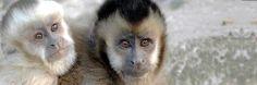 ¿Conoces la Comunidad Inti Wara Yassi?  Llevan más de 20 años cuidando animales silvestres rescatados. Su actividad se concentra en 3 parques de Bolivia: Machía, Ambue Ari y Jacj Cuisi.   ¿Conoces otros proyectos como éste? Nos gustaría que nos lo hicieras saber en este post.  Comunidad #eZOO