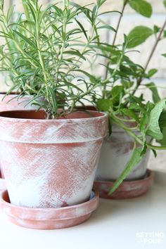 See how to make easy DIY White Washed Terra Cotta Plant Pots for your home and outdoor garden. For herbs, flowers and succulents!
