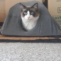 DIY Cat Tent: 9 Steps (with Pictures) Diy Cat Tent, Cat House Diy, Cat Room, Dog Cat, Cat Trees, Pets, Pictures, Animals, Crochet