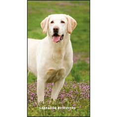 Labrador Retrievers Pocket Planner: Loyal, trustworthy, and devoted, the Labrador Retriever is a true friend. This breed is not only a wonderful family dog, it also serves as a guide dog for the blind, a working dog for the disabled, and is occasionally trained for search and rescue.  $5.99  http://calendars.com/Labrador-Retrievers/Labrador-Retrievers-2013-Pocket-Planner/prod201300004479/?categoryId=cat10086=cat10086#