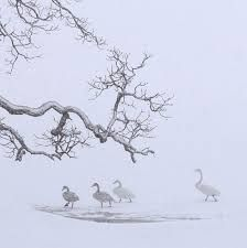 vincent munier - Recherche Google Munier, Contemporary Photographers, Lewis Carroll, Wildlife Photography, Exotic, Images, Illustration Art, Snow, Landscape