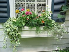 Window Box - Reminds me of our first house!  I miss that place!