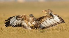 35 Spectacular Examples of Bird Photography - TutorialChip