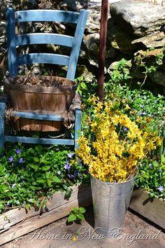 ♥ Spring time in the garden