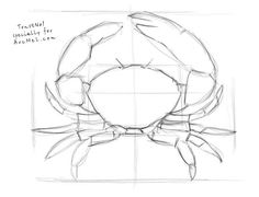 Today we will draw a crab. A crab is a creature that is found alongside the beaches in almost all the countries of the world. Art Painting, Animal Art, Sketches, Animal Drawings, Art Drawings, Drawings, Crab Art, Sea Life Art, Crab Painting