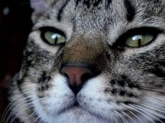 Este é o Chico, o gato da Katia Brufatto.