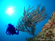 La cercanía de la segunda barrera coralina más grande del mundo propician excelentes paisajes subacuáticos, por lo que el buceo y el snorkel son opciones que no debe desaprovechar.