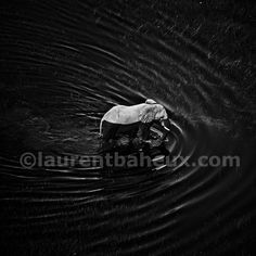 "Saatchi Art Artist Laurent Baheux; Photography, ""Waves around elephant"" #art"