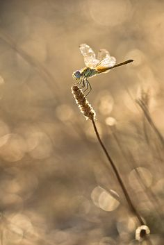 °Dragonfly by Jaquemotte Beautiful Bugs, Beautiful World, Beautiful Creatures, Animals Beautiful, A Bug's Life, Felder, Bugs And Insects, Chenille, All Nature
