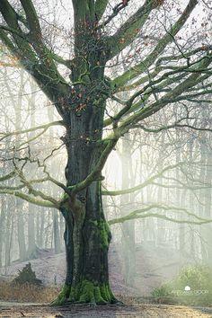 winter beech by Lars van de Goor