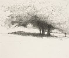 """drawinglandscapes: """" Mary Sprague, Mark's Maples, Little Hammond Road, New York, 2007. Pen and ink. A beautiful example of a tree drawing where texture is used to create light and dark areas. The..."""